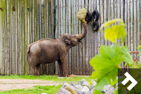 Family Fun Days - Blackpool Zoo - Elephant