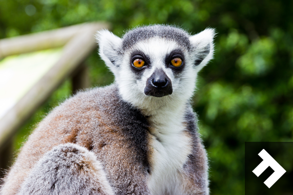 Family Fun Days - Blackpool Zoo - Lemur