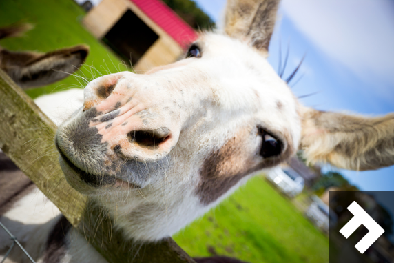 Fun At Whitehouse Farm - Donkey